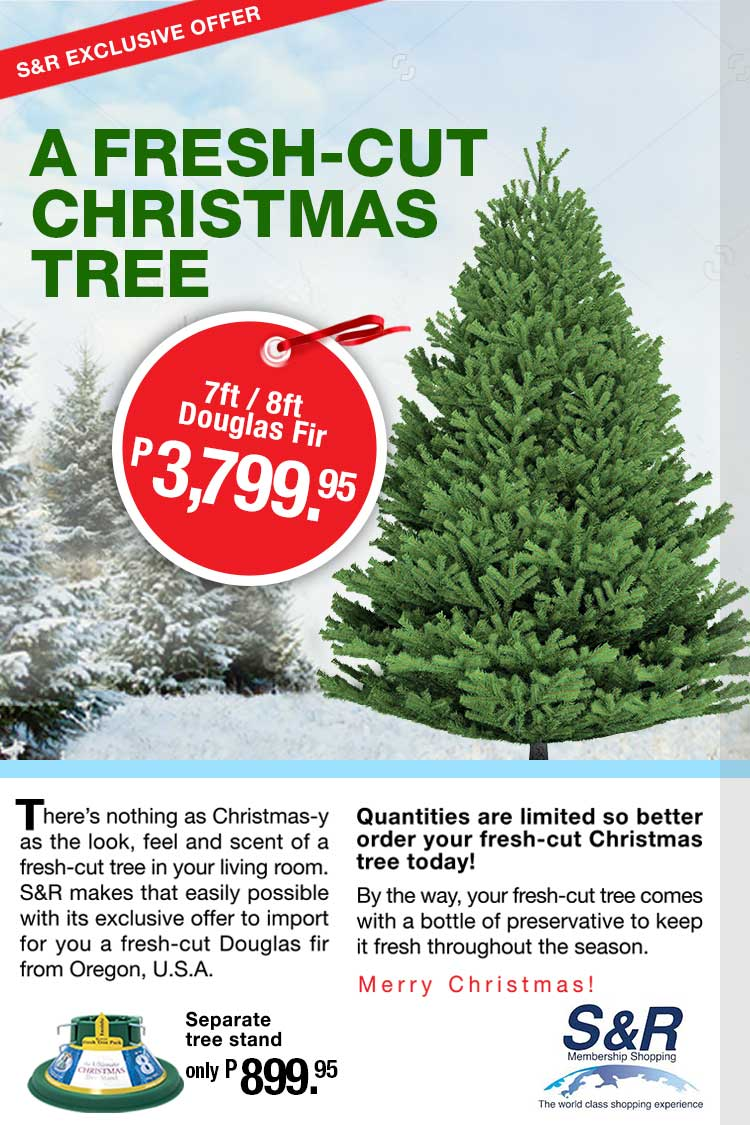 Fresh Christmas Tree Philippines.Have A Real Fir Christmas Tree Only P3 799 95 At S R
