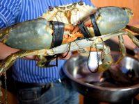 Blue Posts Boiling Crabs Alive