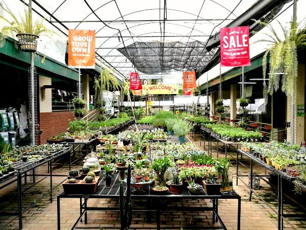 Cedar Hills Garden Center Herbs