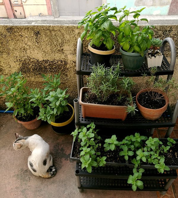 My Herb Garden After 3 Weeks